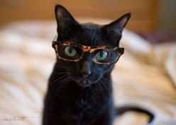 Photographic Print  Cat in Glasses 2  8x10 by instantt on Etsy, $25.00: Hipster Cat, Animals, Glasses, Cat Eyes, Black Cats, Smart Kitty, Blackcats, Cat Lady