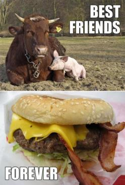 pigs eating bacon | 30 Funny animal captions - part 9, funny animal memes, funny animals ...: Best Friends Forever, Bestfriends, Bff, Funny Stuff, Funnies, Humor, Animal