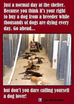 PLEASE, PLEASE, PASS THIS ON! It is a very important issue and is VERY heartbreaking. :(It's hard to look at this, please don't support puppy mills, spay & neuter your pets: Animals, Animal Rights, Dogs, Animal Cruelty, Pet, Animal Abuse