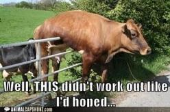 poor cow: Didn T Work, Funny Pictures, Work Outs, Heehee, Funnies, Didnt, I D Hoped