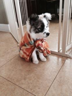 : Puppies, Animals, Dogs, Cape, Pet, Puppys, Adorable, Box, Things
