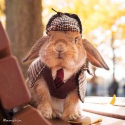 Quite possibly one of the CUTEST rabbits I have ever seen!: Animals, Sherlock Bunny, Costume, Sherlock Holmes, Bunnies, Photo