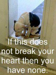 """Quote of pinner: """"SHELTER DOGS. PLEASE adopt a rescue dog, there are so many that need your love. This sweet baby has given up hope, maybe someone saved this precious little one. Pictures like this just make me cry. WE are responsible for this by not"""