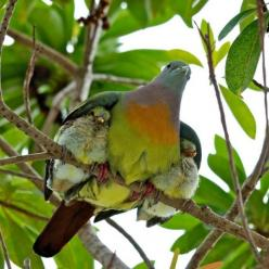 """Recieved this photo on Mother's Day from a friend. Fell in love with it. If only more humans would take lessons from animals on """"child rearing."""" This was a storm in Florida (?) and no nest-maybe they're fledglings, but mom was making sure"""