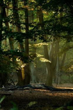 reminds me of my childhood, getting lost (on purpose) in the woods by my house, it's where I fell in love with tree shadows...magic!: