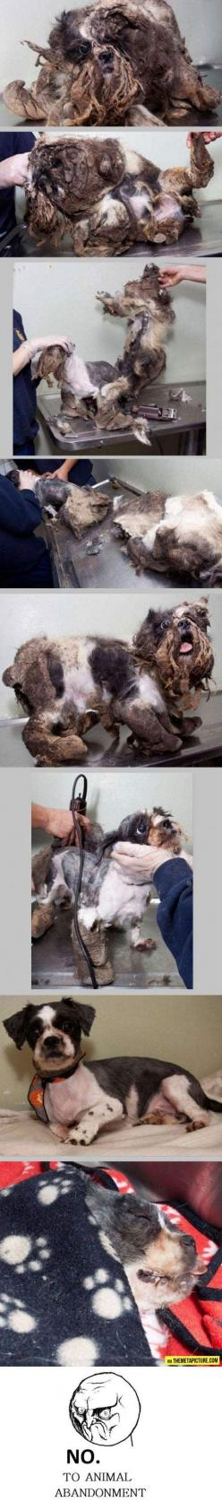 Rescued and saved…: Doggie ́S, Animal Rights, Animal Cruelty, Pet, Animal Abuse, First Haircut, Animal Abandonment, Poor Baby, So Sad