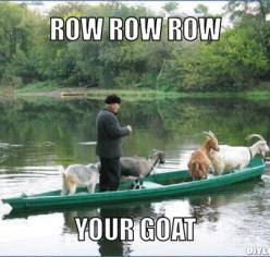 Row Row Row your goat!  #cute #farmlife #goats: Animals, Funny Goats Memes, Quote, Funny Stuff, Humor, Row Row, Goats Funny Meme