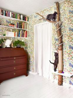 Scratching post.....Tree branch climbing post for your cats! Very clever!: Cats, Idea, Pet, Crazy Cat, Cat Trees, Cat Stuff, Diy Cat, Animal, Cat Room