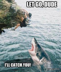 Sharks are just misunderstood. All they want is to be your friend then eat you. That is all.: I Ll Catch, Funny Stuff, Funnies, Humor, Sharks, Shark Week, Animal