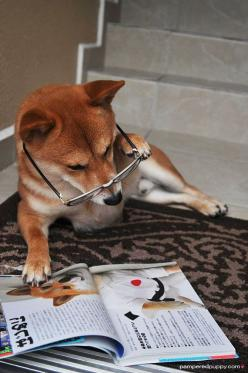 Shiba's are so intelligent they even read books!: Magazine, Avid Doge, Aaron S Doge, Doge Shiba Inus, Pin, Funny, Even Doge, Animal
