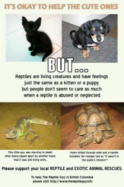 Should it matter what it is? It's not hard to sign a petition or just say no, but it's harder for the animal to live through it: Reptiles, Pets Animals, Help, Adorable Animals, Truth, Animal Abuse, Abuse Animals, Now