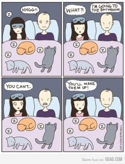 sleeping cats: Animals, Bed, Funny, Crazy Cat, So True, Cat Lady, Human
