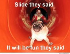 Slide they said... it will be FUN they said.: Funny Animal Memes, Funny Dogs, Funny Dog Memes, Funny Dog Pics, Dog Meme 15 Jpg 604 463, Funny Dog Pictures, Dog Slide