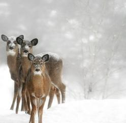 smile for the camera: Animals, Snow, Winter Wonderland, Christmas, Winter Deer, Photo