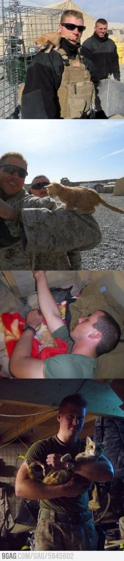 So glad this kitten could bring such happiness for this soldier and vice versa.: Kitten, Friends, Sweet, Cute Cats, Military Men, Pet, Military Cat, Kitty