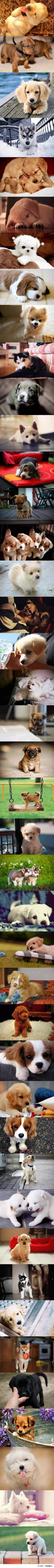 So. Many. PUPPIES!: Doggie, Animals, Cute Puppies, Cuteness Overload, Pet, Puppys, Puppies 3