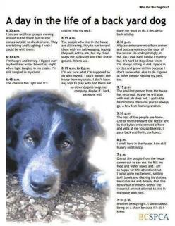 : ( so sad. Don't let your dog be a backyard dog. They love you so much & they deserve so much more than this…: Animals, Dogs, Life, Animal Rights, Backyard Dog, Pet, Back Yard, So Sad