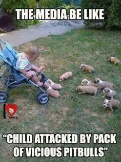 So true. People think that they are bad and dangerous. There is no such thing as a bad dog only a bad owner!!!!! PIT BULLS ARE LOVING ANIMALS. Oh and by attacked more like licked and cuddled to death!!!!: Animals, Puppies, Dogs, Puppys, Funny Stuff, Baby