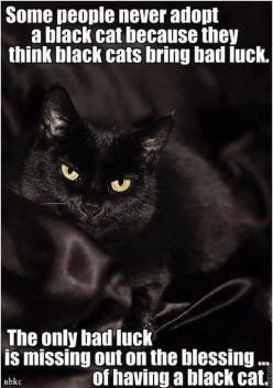 Some people think black cats are bad luck. The only bad luck is missing out on the blessing of adopting a black cat.: Animals, Black Kitty, Pet, Black Cats, So True, Beautiful Black, Blackcats