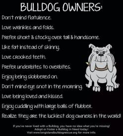 Someone asked me why I would choose a breed with so many issues, I didn't the breed chose me!!: Bulldog S, Animals, Englishbulldog, English Bulldogs, So True, Bulldog Owners, English Bullies, Bull Dogs