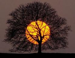 Sometimes in the mist of all the technological wonders I enjoy, I forget that beauty in the natural world is infinitely more breathtaking: Photos, Picture, Moon, Nature, Sunset, Beautiful, Art, Trees, Photography