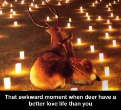 Sorry this made me laugh... ;): Animals, Awkward Moments, Funny Stuff, Humor, Funnies, Love Life, Deer