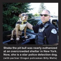 Star Police Detection Dog. I wish i had the space and money to save every shelter and abused animal, especially pit bulls since people constantly abuse them!: Animals, Hero, Pet, Police Dogs, Friend, Pittie