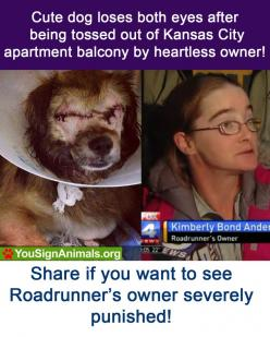 Stop animal cruelty: Animal Petitions, Animal Rights, Apartment Balconies, Stop Animal Cruelty, Investigation, So Sad