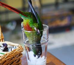Take me down to the parrot ice city where the birds are green and the parrots are pretty....: Bird Parrots, Conure Birds, Green Cheek, Parrots Birds, Pet Birds, Beautiful Birds, Parrot Ice, Photo