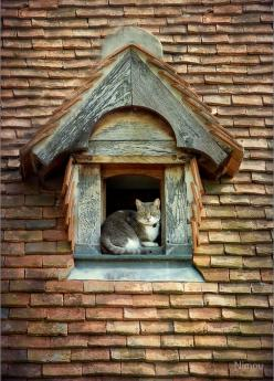 The cottage cat's window! ♡... Re-pin by StoneArtUSA.com ~ affordable custom pet memorials for everyone.: