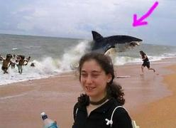 The Funniest Animal Photobombs Ever (PHOTOS)#s627423&title=Fake_Shark_Bomb: Funny Stuff, Photo Bombs, Funnies, Animal Photobomb, Beach, Sharks, Photobombs