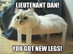The more I look at this, the more I keep laughing.: Cats, Giggle, Animals, Forrest Gump, Funny Stuff, Funnies, Humor