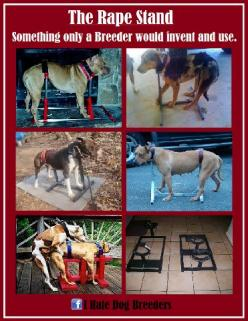 There is no end to the way people can abuse dogs.: Help, Dogs, Animal Rights, Animal Cruelty, Pet, Animal Abuse, People