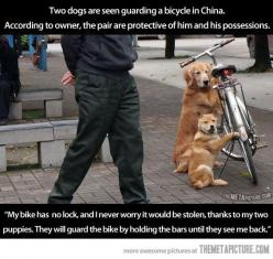 These dogs are awesome…: Awesome So, Bike Dogs, Funny Dogs Protect Owner Bike, Awesome However, Awesome Not, Cycling Bike, Pets Period