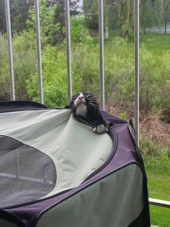 This cat who knew camping was a bad idea. | 37 Animals Who Failed So Spectacularly They Almost Won: Funny Animals, Pics, Animal Pictures, Stuff, Adorable Animals, Funny Pictures, Funny Cats, Funnies, Kitty