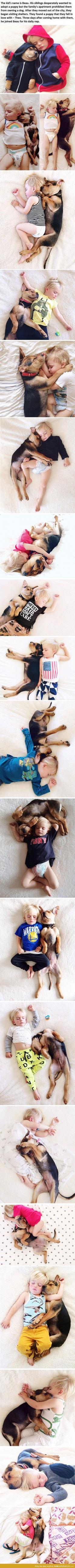 this is adorable :): Cuteness Overload, Dogs, Sweet, Pet, Puppys, Baby, Friend, Kid