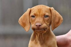 This is going to be the picture I send people who either don't respond to texts, or say something incredibly stupid.: Animals, Dogs, Faces, Funny Stuff, Funnies, Humor, Puppy, Things