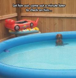 This is HILARIOUS: Animals, Funny Things, Dogs, Pool, Dachshund, Doxie, Funnies
