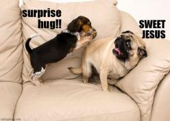 This is just a bit too relatable for my tastes.: Animals, Dogs, Surprise Hug, Funny, Funnies, Pugs, Sweet Jesus, Beagle