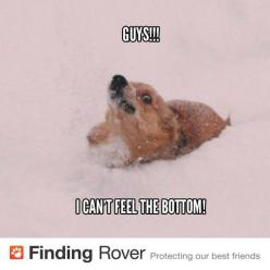 This is my Corgi after a bad snowstorm.  I can barely see her perky little ears!: Corgis Funny, Corgis Don T, Funny Corgi, Corgis Galore, Corgis Corgis Corgis, Corgi Winter, Dog, Corgi Snowdrift