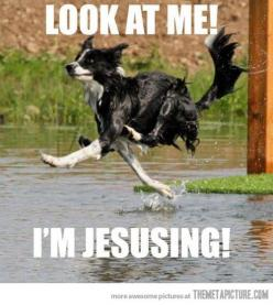 This is so funny!: Funny Animals, Funny Dog Walking On Water, Haha Funny, Giggle, Funny Pictures, I M Jesusing, Friday Funny, So Funny, Can'T Stop Laughing