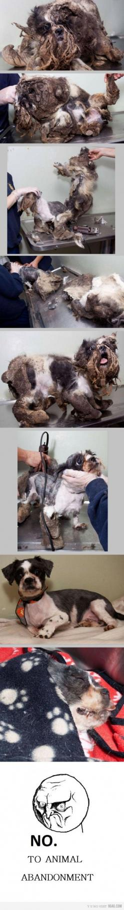 This is this dogs first haircut. You have to double click to get to see it up close. At first I wasn't sure what had happened to this poor little guy.: Doggie ?S, Animal Rights, Animal Cruelty, Pet, Animal Abuse, First Haircut, Animal Abandonment, Poo