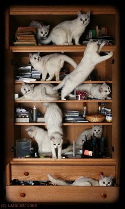 This is what it feels like with one cat that climbs all over the furniture!: Crazy Cats, Animals, Meow, Catlady, Book, Kittens, Kitty, Cat Lady, White Cat
