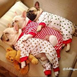 This masterful spooning situation.   50 Adorable Reasons That 2013 Was The Year Of The French Bulldog: Cuteness, Puppies, Animals, French Bulldogs, Christmas French Bulldog, Frenchbulldogs, Pets, Puppy