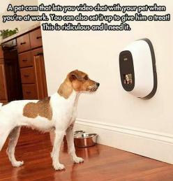 This may be one of the coolest things ive ever seen!: Animals, Idea, Dogs, Stuff, Pets