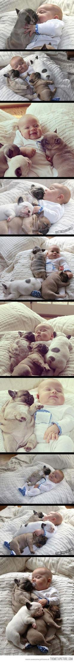 This may be the cutest thing EVER!!!: Cuteness Overload, French Bulldogs, My Heart, Puppy, Baby, Animal