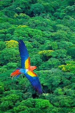 This picture makes me happy.  Beautiful, colorful macaw.: Picture, Beautiful Macaw, Beautiful Colors, Colourful Macaw, Colorful Freedom, Color Spiral, Awesome Colors, Beautiful Birds