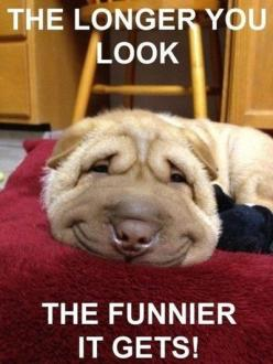 This Pin was discovered by Karren Haefner935. Discover (and save!) your own Pins on Pinterest.: Face, Animals, Dogs, Pet, Funny, Funnies, Smile