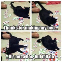 This time.: Funny Animals, Funnycatmemes Funnyanimals, Funny Animal Pictures, Funnyanimals Memes, Funny Pictures, Funny Cats, Nice Things, Black Cat, Animals Pictures