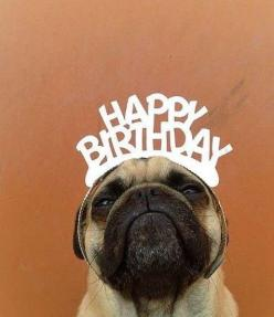 TODAY WAS MY 15TH BIRTHDAY! Though I would share cuz I'm told I can be selfish in my birthday! : Animals, Birthday Wishes, Bday, Dogs, Happy Birthday Pug, Pet, Birthdays, Pugs, Happybirthday